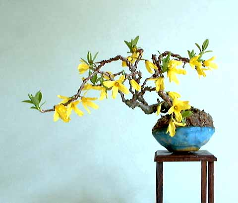 Mini-Bonsai: Golden Bellflower